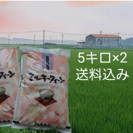 たっちゃん 新米ミルキークィーン精白米5キロ×2袋 5キロ×2