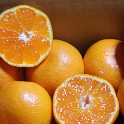 【2kg】甘くてパクパク♪小玉サイズの有田みかん 2kg(箱込み) 果物や野菜などの宅配食材通販産地直送アウル