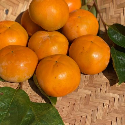 富有柿Mサイズ16個+柿の葉茶3個セット 2.5kg 果物や野菜などの宅配食材通販産地直送アウル