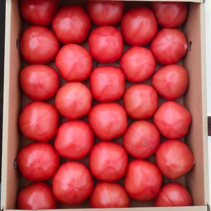 くるるんトマトファーム龍農園 【訳あり】赤採りトマト2箱(4kg箱満杯×2) 2箱(4kg箱満杯×2)