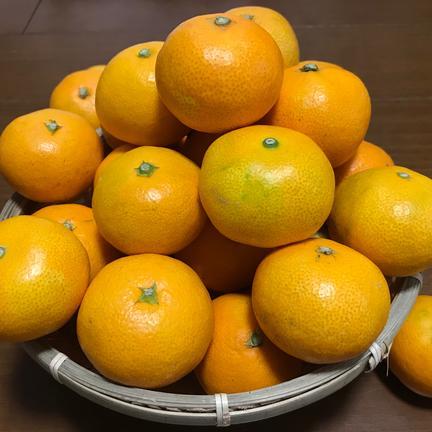お試しセット商品『早生みかん2Sサイズ3㌔』『レモン1㌔』 早生みかん3㌔とレモン1㌔ 果物や野菜などの宅配食材通販産地直送アウル