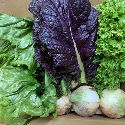 hopewill淡路島 新玉ねぎ1.5kgとレタス2個とわさび菜とからし菜の淡路島からの旬の野菜セット❗️ 旬の野菜4種