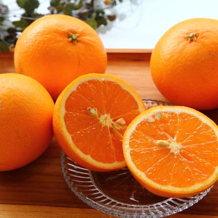 主井農園 清見オレンジ ご家庭用 5kg 果物や野菜などの宅配食材通販産地直送アウル
