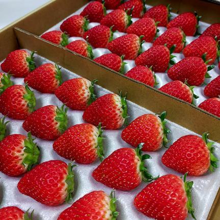完熟よつぼし 48粒入り(2トレイ) 2トレイ 48粒入り 果物や野菜などの宅配食材通販産地直送アウル