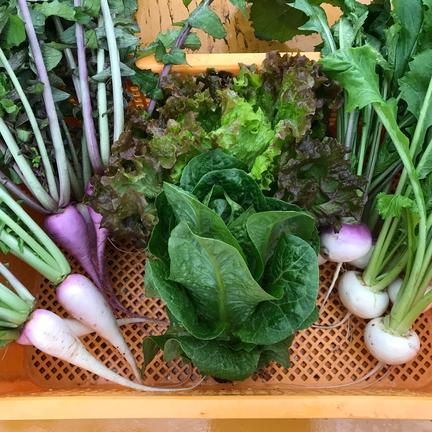 大樹地農園 6品種の野菜を使ったサラダセット🥗 1.7kg
