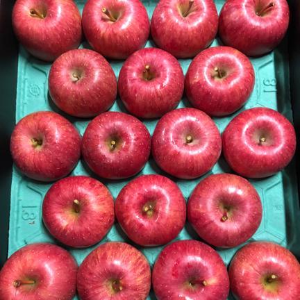 数量限定!お歳暮 秀品ギフト樹上完熟ふじ約5キロ 約5キロ 果物や野菜などの宅配食材通販産地直送アウル