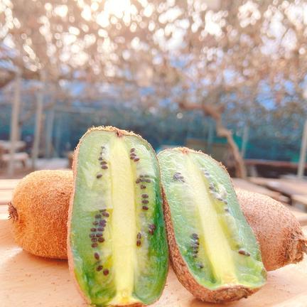 静岡県産香緑キウイSサイズ 約16個前後 果物や野菜などの宅配食材通販産地直送アウル