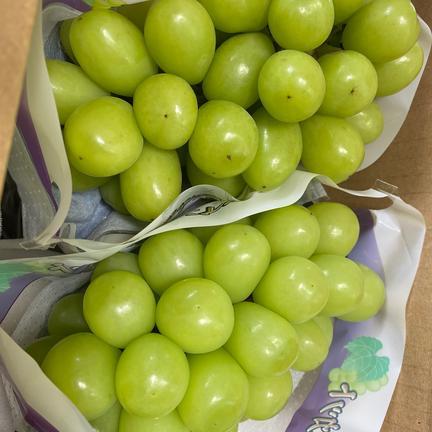 シャインマスカット 2kg 果物や野菜などの宅配食材通販産地直送アウル