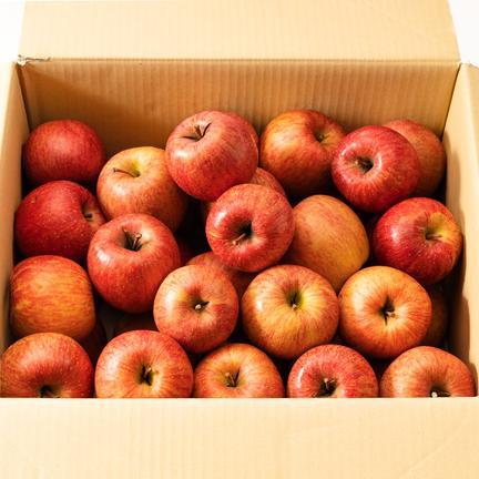 【加工用】サンふじバラ詰め 約14キロ 果物や野菜などの宅配食材通販産地直送アウル