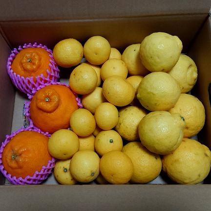 パインみかん  詰め合わせセット 約3,5キロ 果物や野菜などの宅配食材通販産地直送アウル