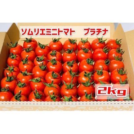 畑の宝石 【希少な高濃度フルーツトマト】ソムリエミニトマト プラチナ2kg 2kg