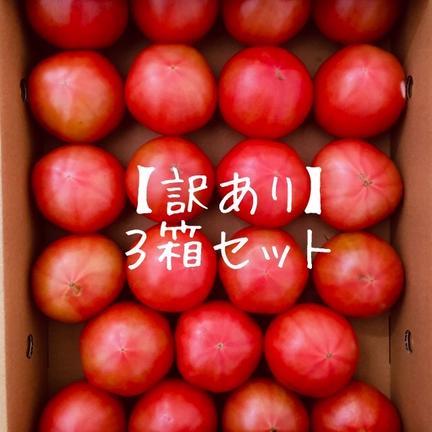 くるるんトマトファーム龍農園 【訳あり】赤採りトマト3箱(4kg箱満杯×3) 約12kg(4kg箱満杯×3)