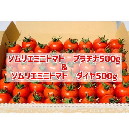 畑の宝石 ソムリエミニトマト ダイヤ500gとプラチナ500gの食べ比べセット 各500g 合計1kg