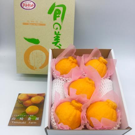 完熟不知火 レギュラー(5〜6玉)デコポン 約1.8kg 果物や野菜などの宅配食材通販産地直送アウル