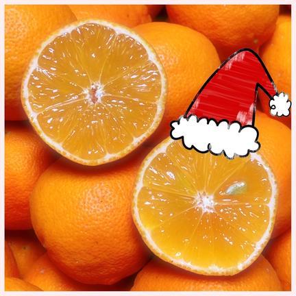 《2K》超希少☆丸くて可愛い赤レモン増量中+おまけ 2キロ 30個程度 果物や野菜などの宅配食材通販産地直送アウル