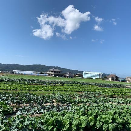 farm house ちしゃ 島の恵♡季節の野菜セット 8〜10種類の野菜