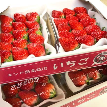 Nakayama Farm KASAKOYA 【お試しサイズ・クール冷蔵便】キンド酵素栽培いちご「さがほのか」2パックセット 270g×2パック