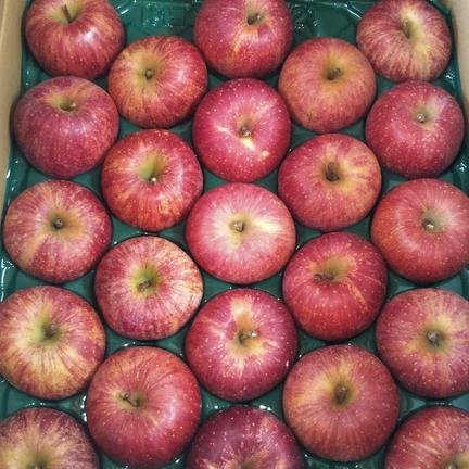 りんご  ふじ 小玉 5kg 5kg(20~25個) 果物や野菜などの宅配食材通販産地直送アウル