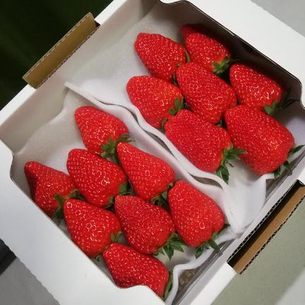 きらぴ香 完熟大粒イチゴ 280グラム×2パック 果物や野菜などの宅配食材通販産地直送アウル