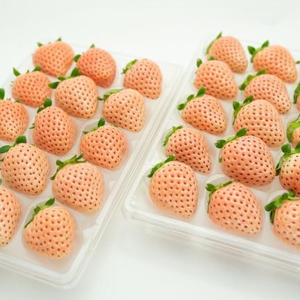 【桜色いちご】佐賀県産 イチゴ 淡雪 220g 2パック入り 220×2 果物や野菜などの宅配食材通販産地直送アウル