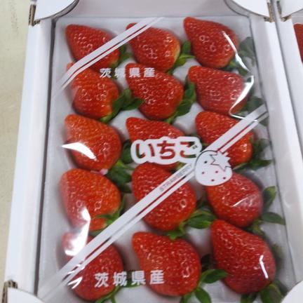 クール便 大玉イチゴ 朝採り2品種 800g 果物や野菜などの宅配食材通販産地直送アウル