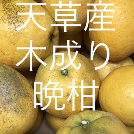 松岡農園 晩柑 家庭用 14kg  箱込14kg