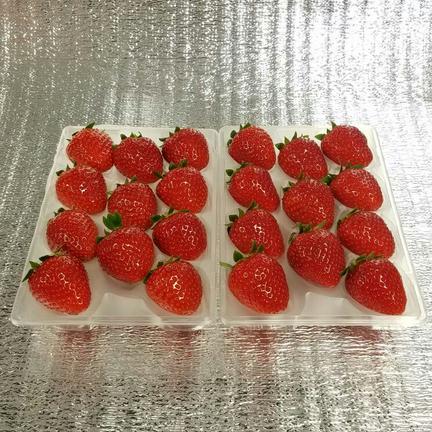 【送料無料キャンペーン中】22粒『モカベリー』 苺 イチゴ ※時間指定は可能です。 一箱 苺のみ約500g【約250g×2パック(1パック11粒)】 果物や野菜などの宅配食材通販産地直送アウル