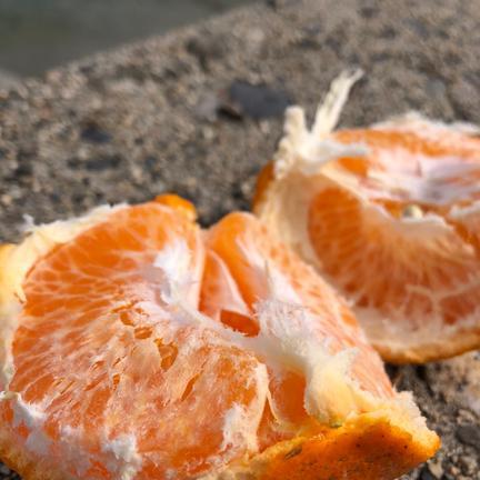 瀬戸内産はるみと伊予柑セット 4kg 果物や野菜などの宅配食材通販産地直送アウル