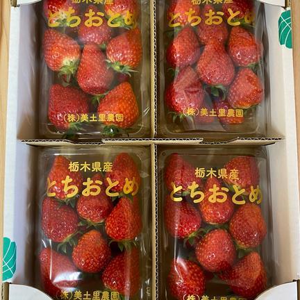 《栃木県茂木町産》 朝採れ完熟とちおとめ 4P 280g x4パック 果物や野菜などの宅配食材通販産地直送アウル