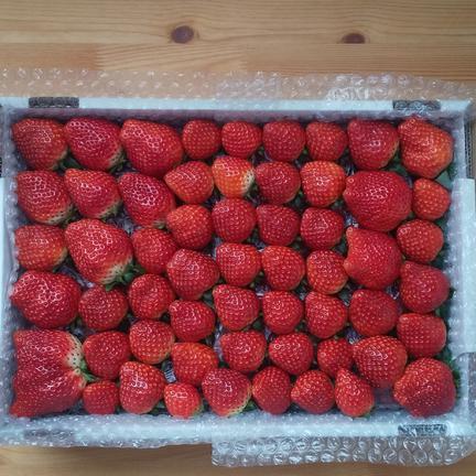 よくばり詰めラージ 2.6kg 果物や野菜などの宅配食材通販産地直送アウル