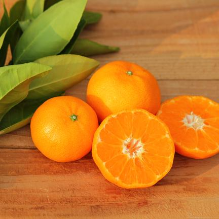 主井農園 たまみ1kg(お試し用) 1kg 果物や野菜などの宅配食材通販産地直送アウル