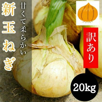 ミヤハラ農園 トロトロ新玉ねぎたっぷり20kg!数量限定!新タマネギ 20kg
