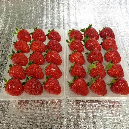 【送料無料キャンペーン中】30粒『モカベリー』 苺 イチゴ ※時間指定は可能です。 一箱 苺のみ約500g【約250g×2パック(1パック15粒)】 果物や野菜などの宅配食材通販産地直送アウル