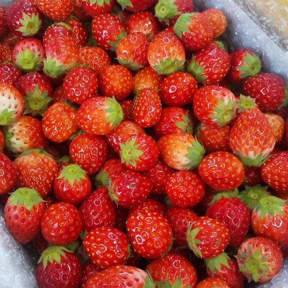 栃木の極小粒とちおとめ1キロ 1kg 果物や野菜などのお取り寄せ宅配食材通販産地直送アウル
