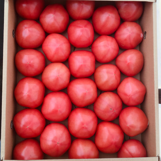 【訳あり】赤採りトマト1箱(4kg箱満杯) 1箱(4kg箱満杯) 果物や野菜などのお取り寄せ宅配食材通販産地直送アウル