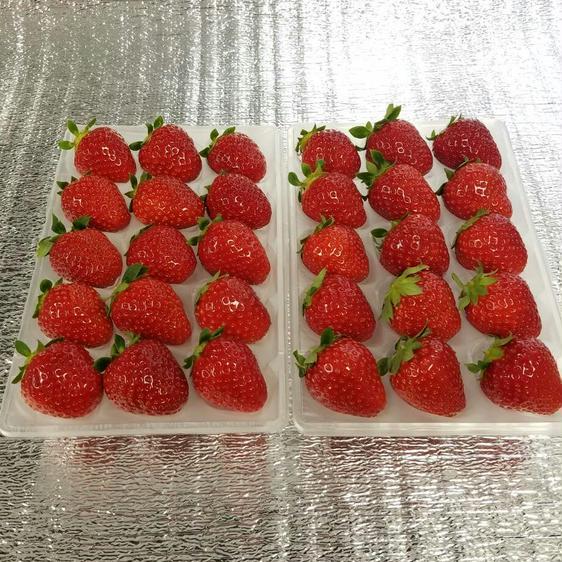 30粒『モカベリー』 苺 イチゴ ※時間指定は可能です。 一箱 苺のみ約500g【約250g×2パック】 果物や野菜などのお取り寄せ宅配食材通販産地直送アウル