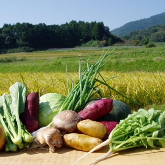 おまかせ新鮮野菜8品セット 果物や野菜などのお取り寄せ宅配食材通販産地直送アウル