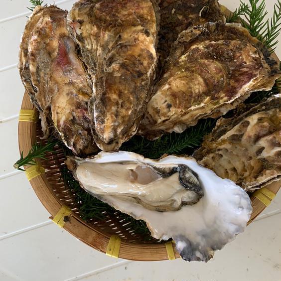 宮城県牡鹿半島小網倉浜産の殻牡蠣 約1k g 果物や野菜などの宅配食材通販産地直送アウル