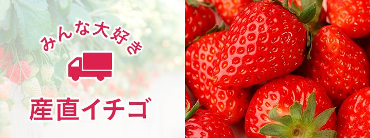 食材通販産地直送アウルの新鮮いちご