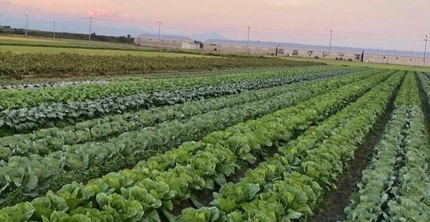 高島農産(ないとうさん家の野菜) 高島市