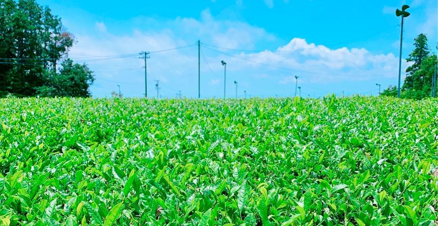 みずたま農園製茶場 牧之原市
