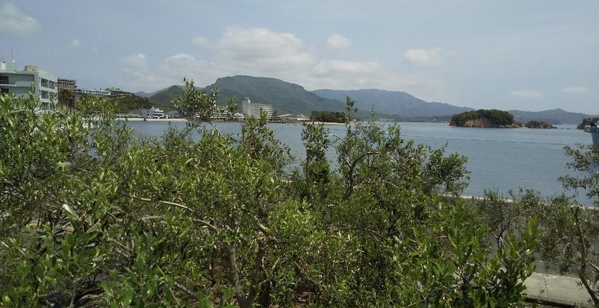 小豆島オリーブ 土庄町