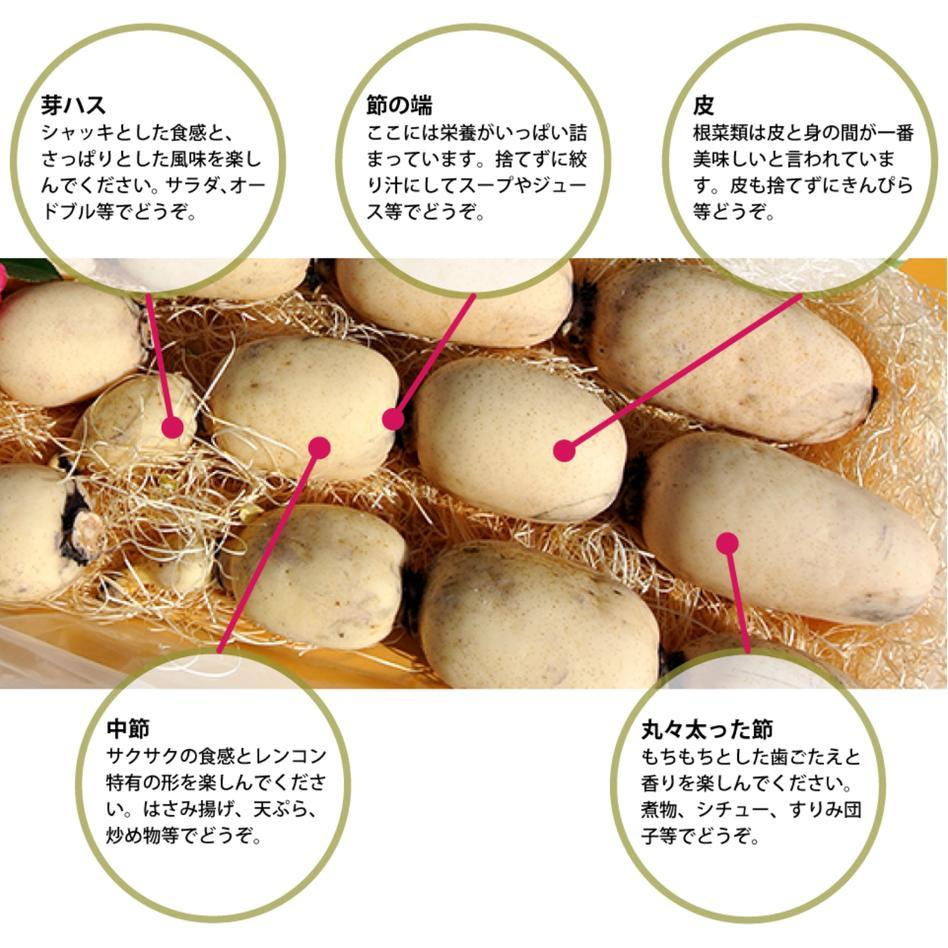 武井のれんこん 4kg (2kg+2kg) 4kg (2kg+2kg) 野菜/蓮根通販