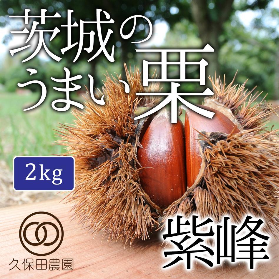 茨城のうまい栗(紫峰)約2kg(約70個) 2kg(約70個) 果物/栗通販