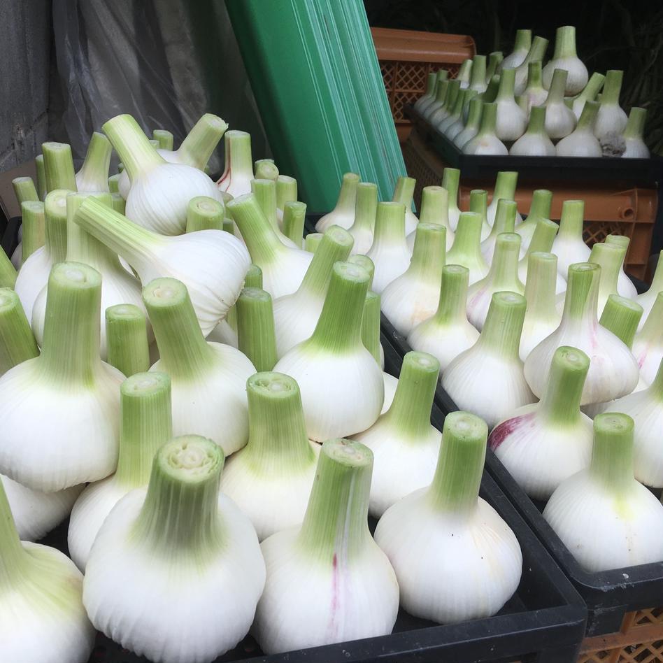 生にんにく大玉5個とにんにくの芽500gと訳あり自然薯1kg 生にんにく大玉5個とにんにくの芽500gと訳あり自然薯1kg 野菜/にんにく通販