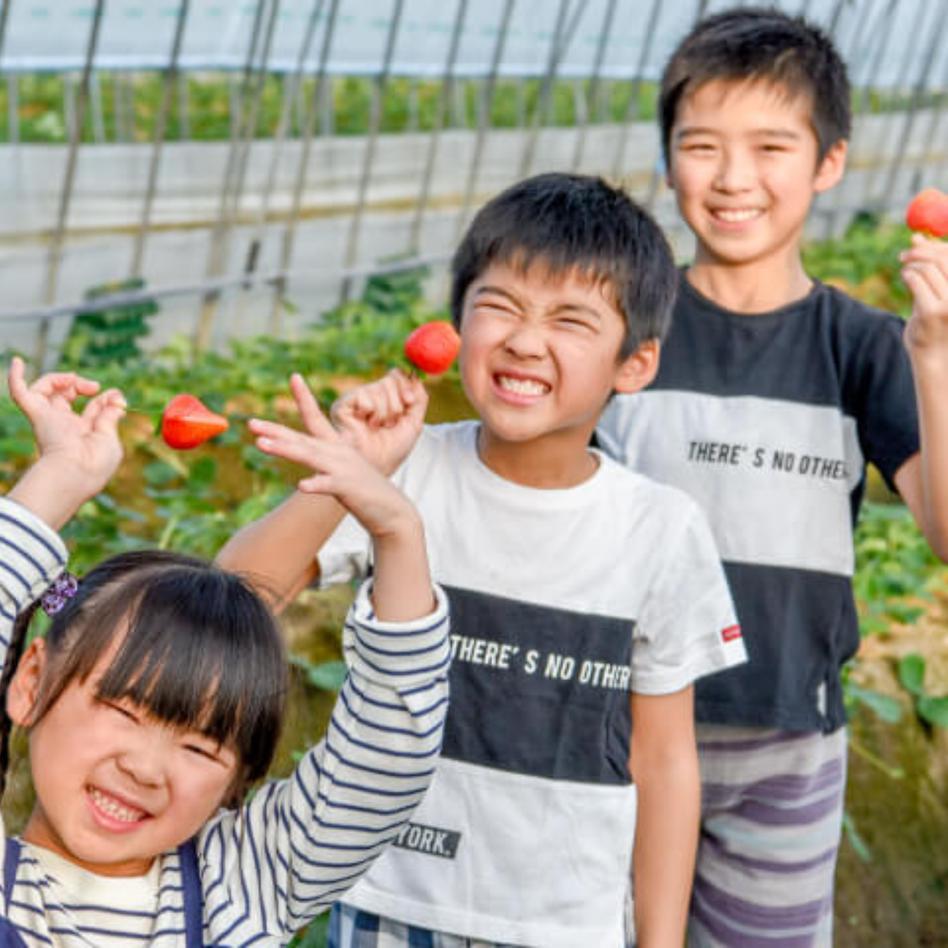 プレミアムいちご【18玉】 果物/いちご通販
