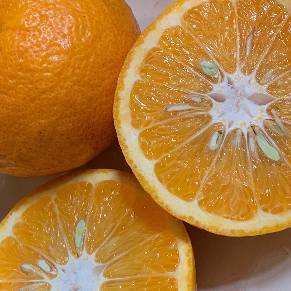 伊豆白浜産 自然栽培の甘夏【訳あり】5kg 約5kg 果物/柑橘類通販