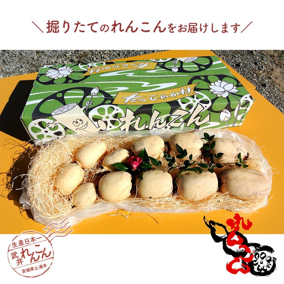 武井のれんこん 2kg 2kg 野菜/蓮根通販
