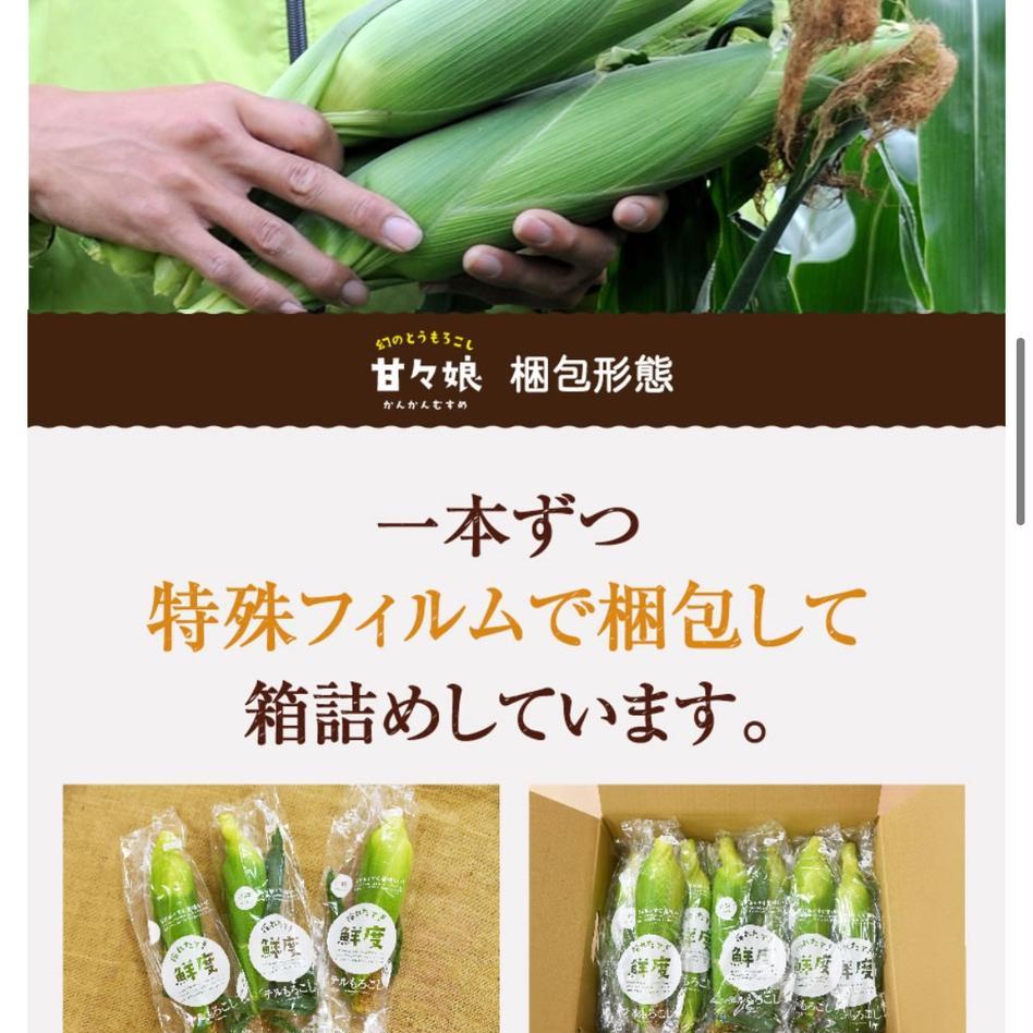 先端カット訳あり ホワイトショコラ 5〜7本入り(3L〜L)『リョウもろこし』 1.75kg 野菜/とうもろこし通販