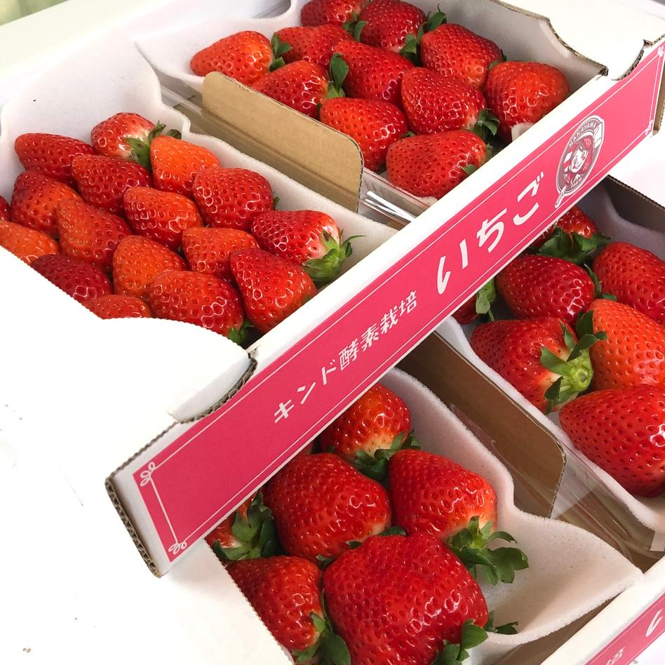 【サイズ色々、クール冷蔵便】キンド酵素栽培いちご「さがほのか」 270g×4パック サイズ3L〜Lの混合です。 果物/いちご通販